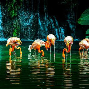 Flamingo by Ashraf Jandali - Animals Birds ( plant, orange, waterfall, flamingo, lake )