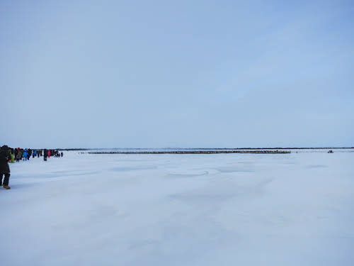 Reindeers crossing the ice road Mackenzie River