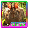 Guide Rabbit Breeding