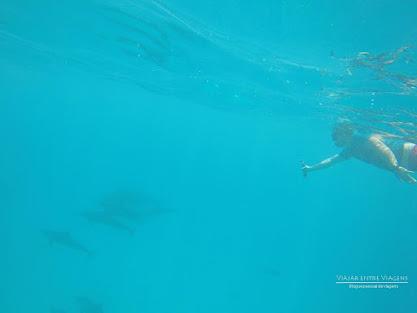 nadar com golfinhos Maldivas Atol Malé Sul