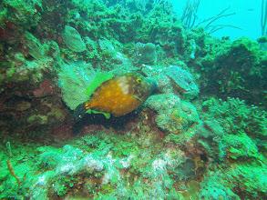 Photo: Yellow Spotted Filefish