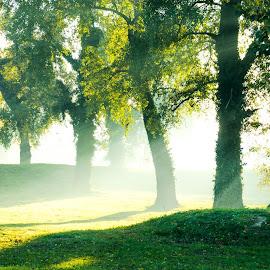 Autumn4 by Josip Ćutunić - Landscapes Forests ( forrest, nature, tree, fog, grass, autumn, landscape, morning, light, sun )