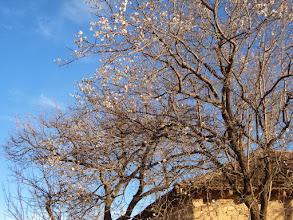Fotoğraf: ağaçlar çiçek