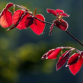 by Miroslava Winklerová - Nature Up Close Leaves & Grasses