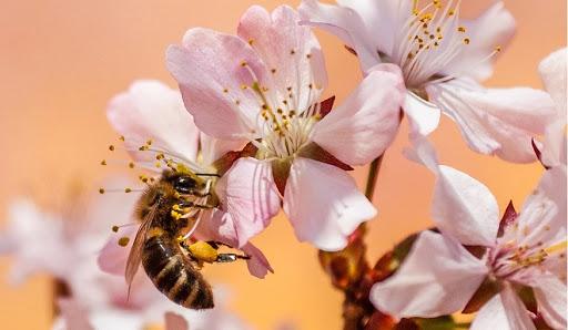 Informational QR codes educate Pollinator Garden visitors