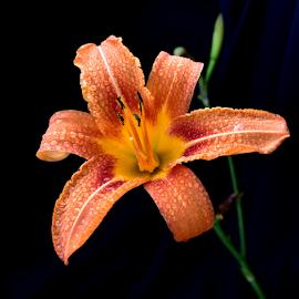 by Biljana Nikolic - Flowers Single Flower