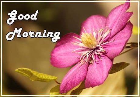 Good Morning Flowers Apk Download Apkpureco
