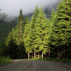 by Reinilda Sissons - Landscapes Forests ( , #GARYFONGDRAMATICLIGHT, #WTFBOBDAVIS )