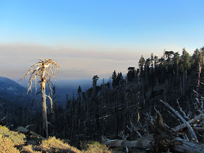 Photo: View south on PCT east of Hawkins Ridge Trail junction