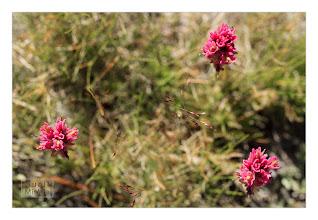 Photo: Eastern Sierras-20120717-693
