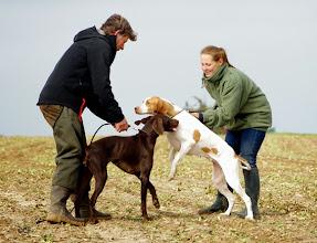 Photo: Changement de chiens