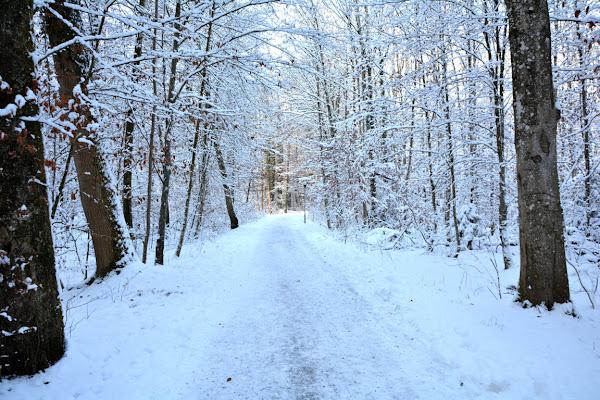 Foresta bianca di akidelpre