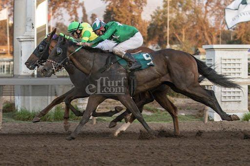 La Colora (Buzzword) gana Handicap (1000m-Arena-CHS). - Staff ElTurf.com