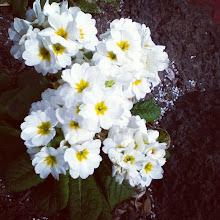 Photo: February 27: Morning Flower