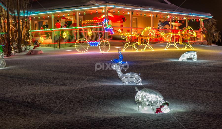 Beautiful Christmas Decoration   by Joseph Law - Public Holidays Christmas