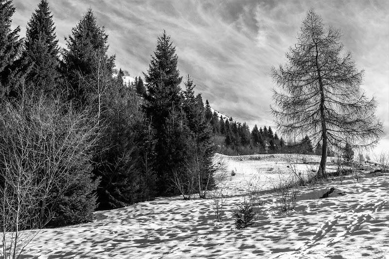 neri alberi stanchi... di Cris_Cri