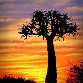 keimoes best by Theuns de Bruin - Nature Up Close Trees & Bushes ( k b )