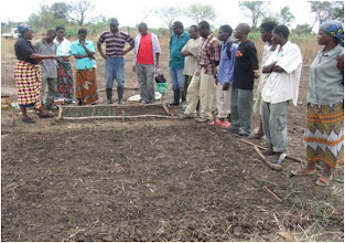 Photo: Viewing seedbed at WCS training on SRI conducted by Henry Ngimbu in Mfuwe in November 2009
