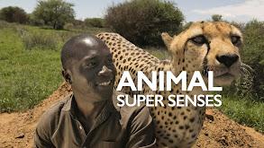 Animal Super Senses thumbnail