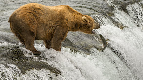 Salmon Season thumbnail