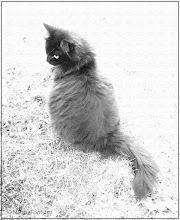 Photo: The cat model © NF PhotoArt 160426 http://nfbild2.blogspot.se/2016/04/the-creative-playroom-5-cat-model.html