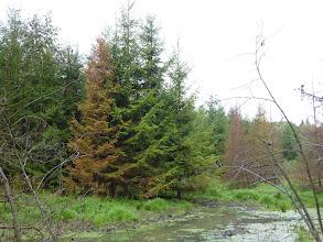 Photo: Красивые елки