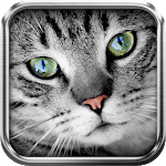 Translator for cat Simulator Icon