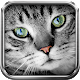 Translator for cat Simulator (game)