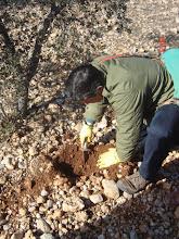 Photo: Finding the Black Truffle Tuber & Aestivum Melanosporum