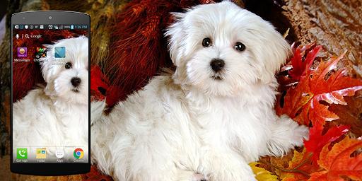 かわいい犬のライブ壁紙