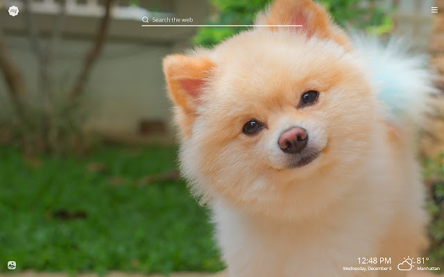 My Pomeranian - Cute Dog & Puppy Wallpapers