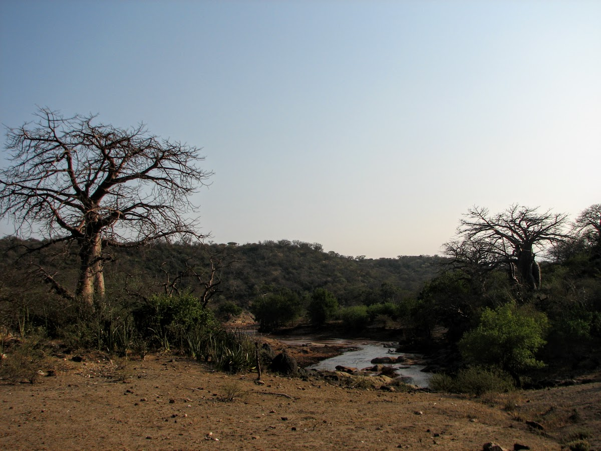 Baobab and river hunting grounds