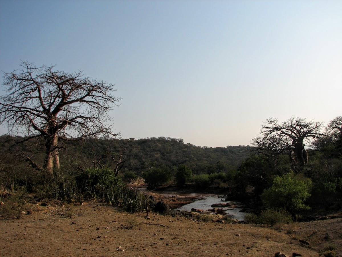 Terrains de chasse avec baobab et rivière