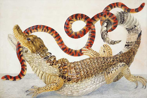 maria sybilla merian, cayman with false coral snake