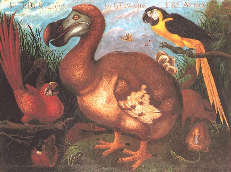 g. edwards, the dodo & given, 1759