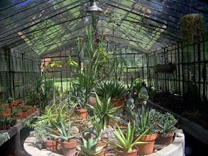 Photo: Botanical Gardens greenhouse