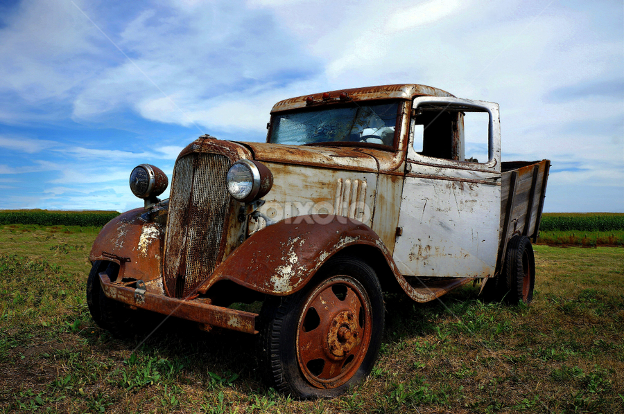 Let the Good Times Roll ! by Jan Siemucha - Transportation Automobiles ( field, old, pasture, truck, chevy )