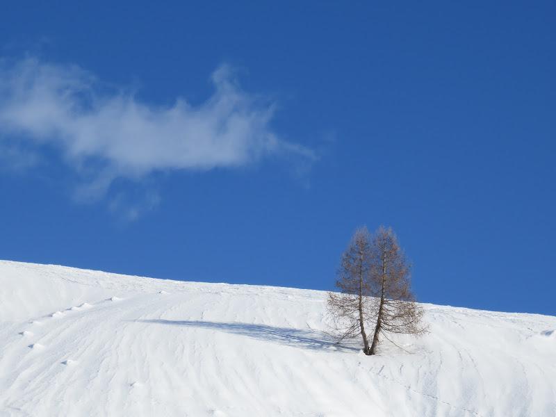 l'albero disse alla nuvola....  di mariellaturlon