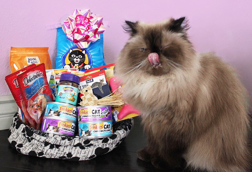 How to Pamper Your Cat on a Budget and Why My Cats are Spoiled Rotten.jpg