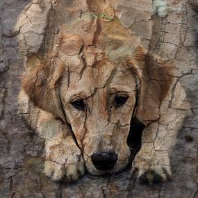 by Janet Young- Abeyta - Digital Art Animals (  )