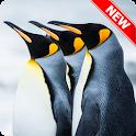 Beautiful Penguin Wallpaper icon