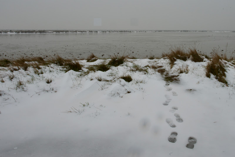 Dalla neve all'acqua di Ltz/rivadestra