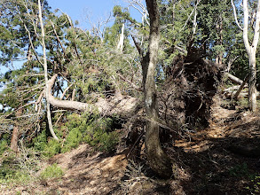 尾根沿いは倒木で通行困難