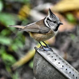 by Heather Aplin - Animals Birds