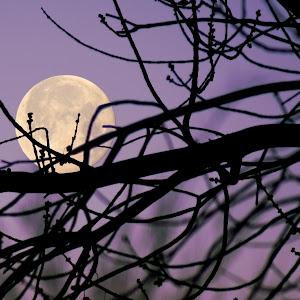 Moon Tree 2nd (4).JPG