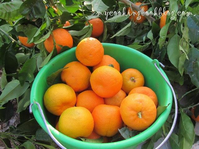 горчив портокал (Bitter orange)