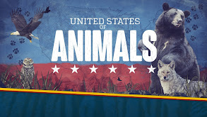 United States of Animals thumbnail