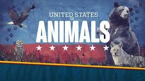 United States of Animals thumbnail