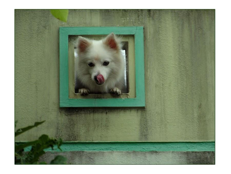 by Ramesh K Kaliaperumal - Animals - Dogs Portraits