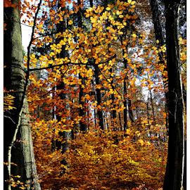 jesiennie by Kazimierz Sakowicz - Uncategorized All Uncategorized (  )